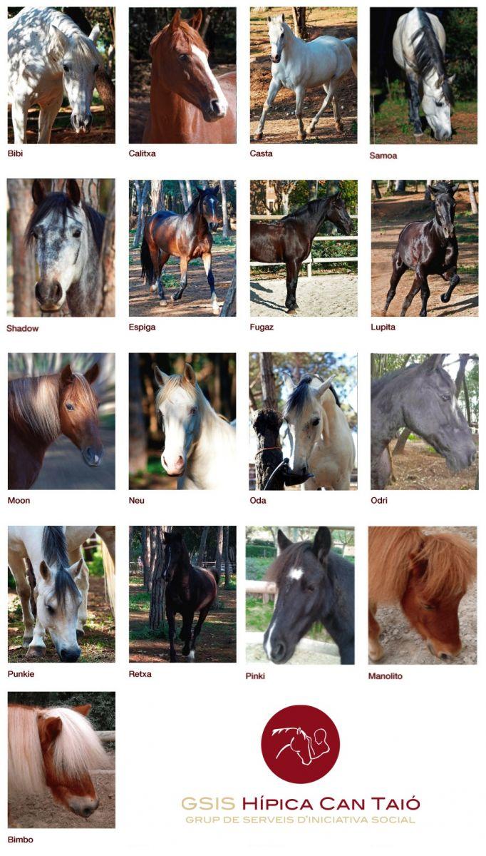 Cavalls Can Taio